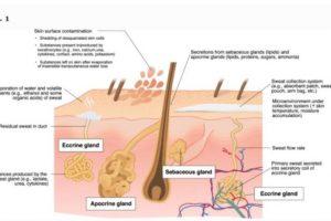 Tăng tiết mồ hôi toàn thân một phần do sự kích thích của thần kinh giao cảm